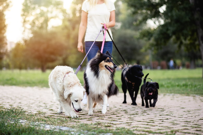 Walk Dogs and Pet Sitting